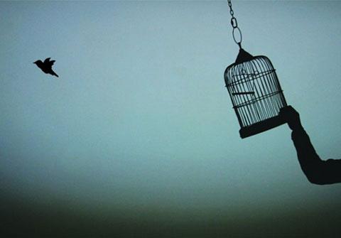 metal birdcage